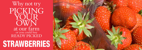 9332-DOUBLE-PYO-boxes-Strawberries